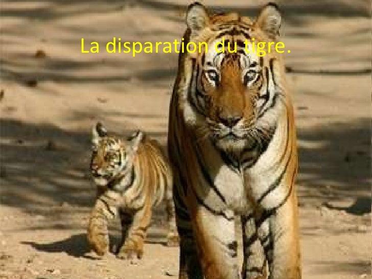 La disparation du tigre.