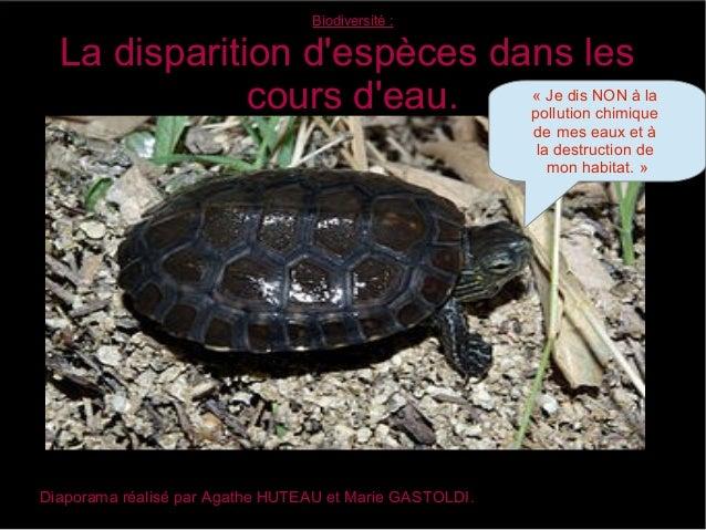 Biodiversité:La disparition despèces dans lescours deau.Diaporama réalisé par Agathe HUTEAU et Marie GASTOLDI.« Je dis NO...