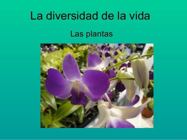 La diversidad de la vida Las plantas
