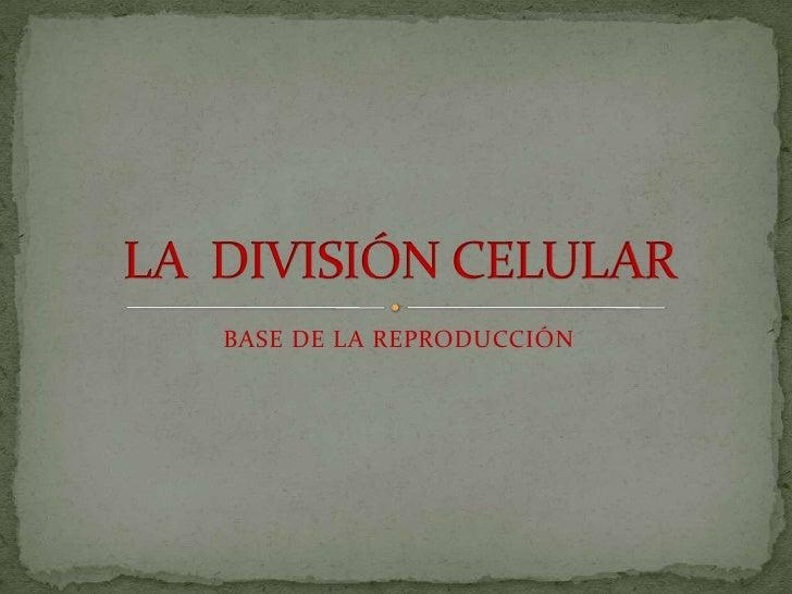 BASE DE LA REPRODUCCIÓN<br />LA  DIVISIÓN CELULAR<br />