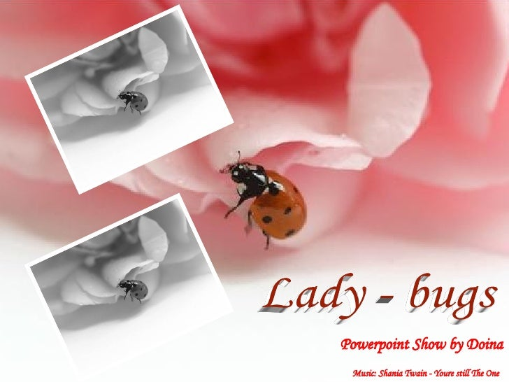 Lady - bugs Lady - bugs Powerpoint Show by Doina Music: Shania Twain - Youre still The One