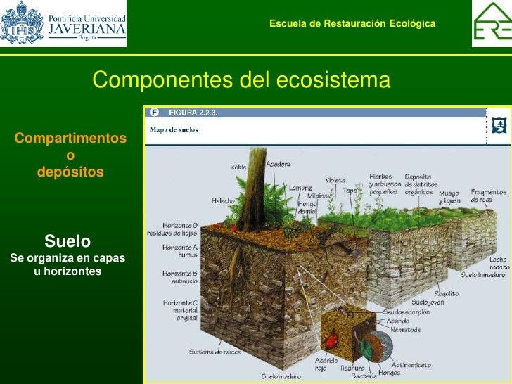 La ecolog a basica en los ecosistemas 2009 1 for Componentes quimicos del suelo