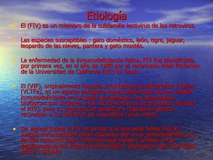 La enfermedad de la inmunodeficiencia felina fiv for El sida se contagia por saliva