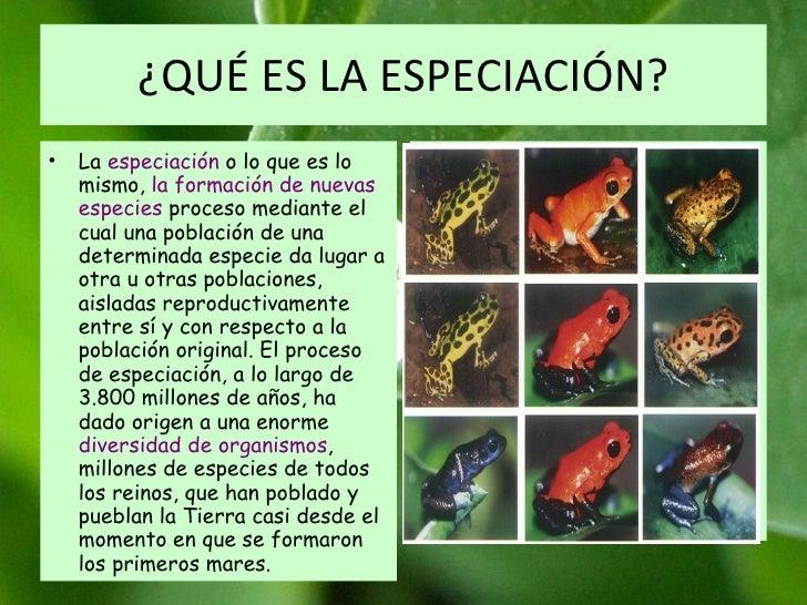 ¿QUÉ ES LA ESPECIACIÓN? La  especiación  o lo que es lo mismo,  la formación de nuevas especies  proceso mediante el cual ...