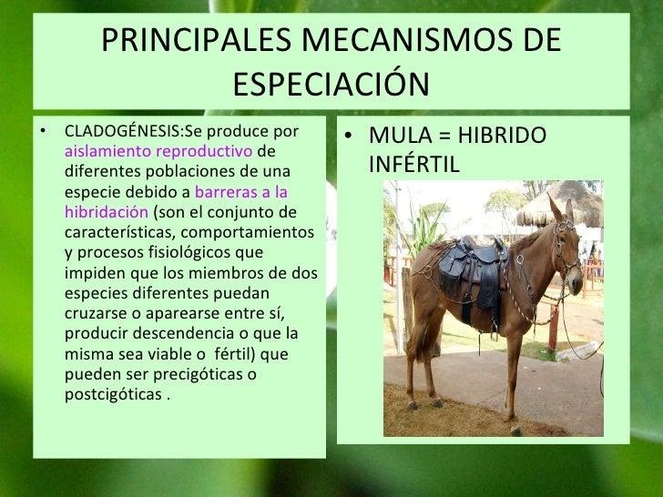 PRINCIPALES MECANISMOS DE ESPECIACIÓN CLADOGÉNESIS:Se produce por  aislamiento reproductivo  de diferentes poblaciones de ...