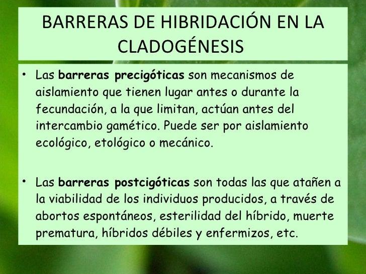 BARRERAS DE HIBRIDACIÓN EN LA CLADOGÉNESIS  Las  barreras precigóticas  son mecanismos de aislamiento que tienen lugar ant...