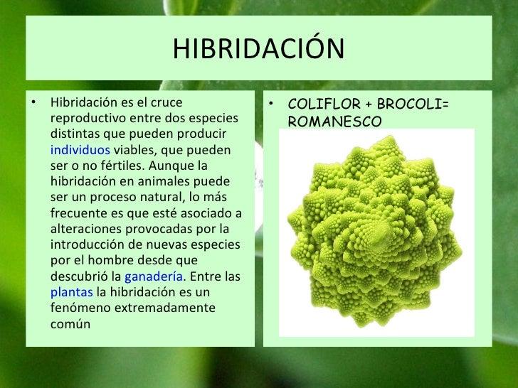 HIBRIDACIÓN Hibridación es el cruce reproductivo entre dos especies distintas que pueden producir  individuos  viables, qu...