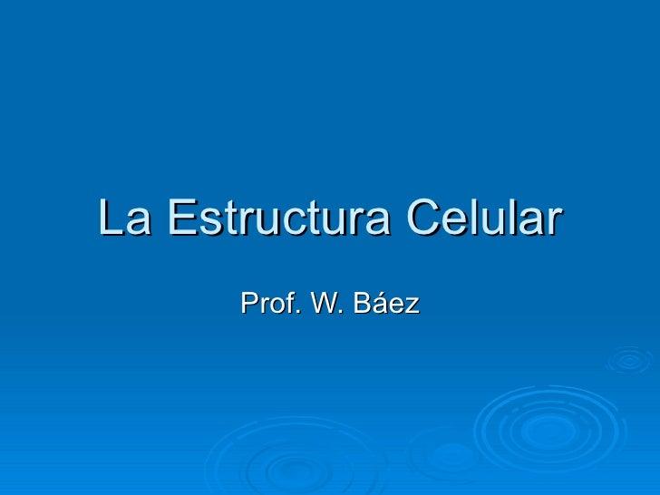 La Estructura Celular Prof. W. Báez