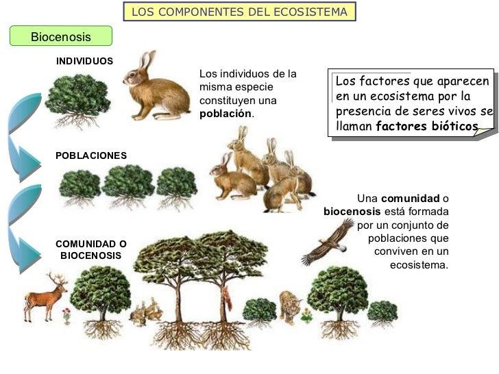 La estructura de los ecosistemas 2011