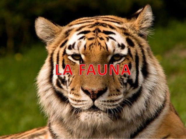 CONTENIDO I. CONCEPTO II. FAUNA EN COLOMBIA III. CLASIFICACION DE LA FAUNA IV. FAUNA SILVESTRE V. FAUNA DOMESTICA VI. FAUN...