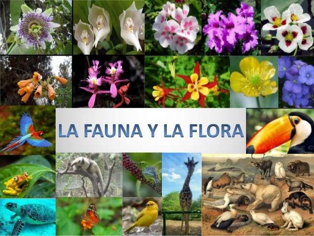 La fauna es el conjunto de especies animales quehabitan en una región geográfica, que son propiasde un período geológico o...