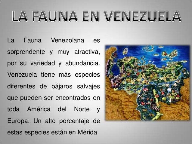 Venezolana en merida 4 - 4 3