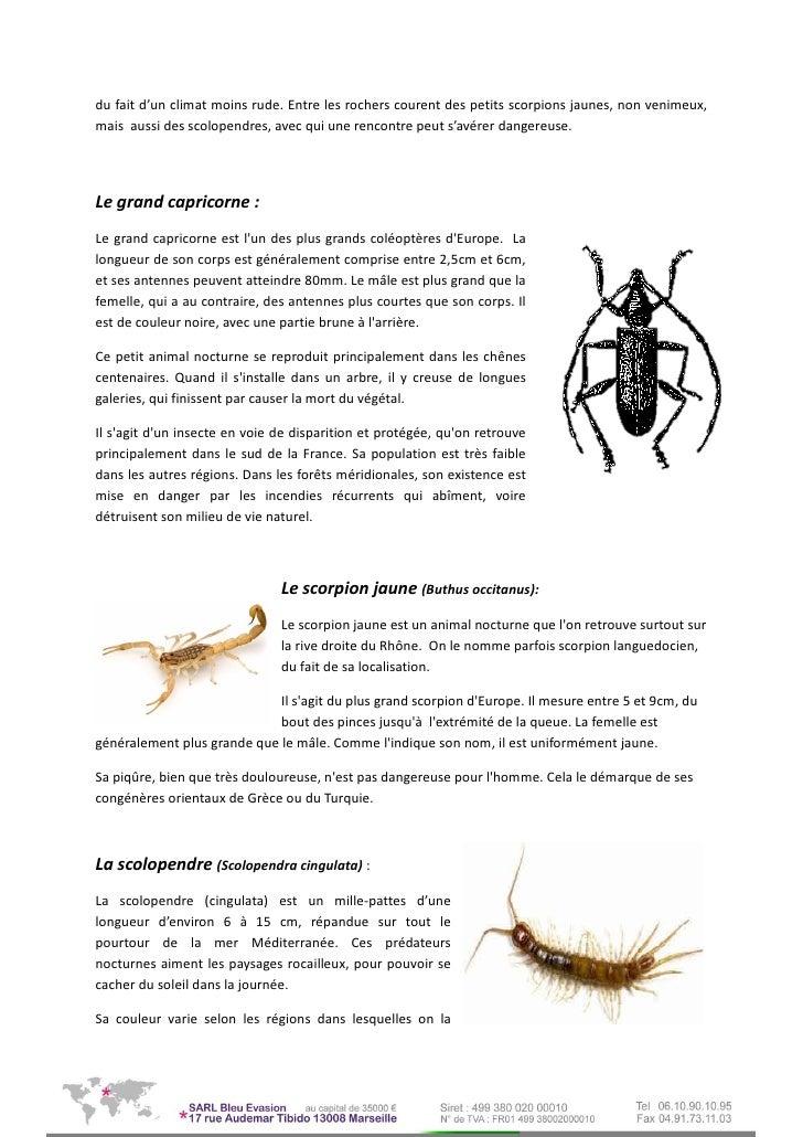 Scorpion mâle datant Scorpion femelle