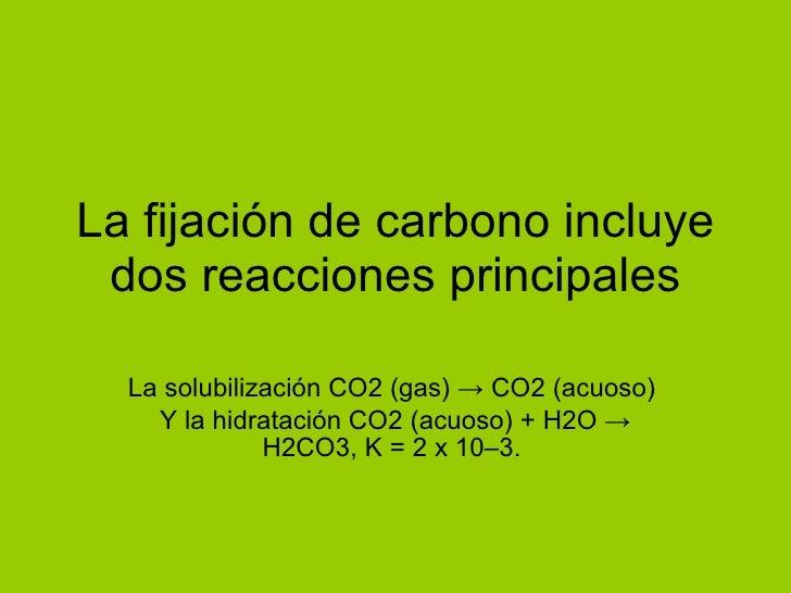 La fijación de carbono incluye dos reacciones principales La solubilización CO2 (gas) -> CO2 (acuoso)  Y la hidratación CO...