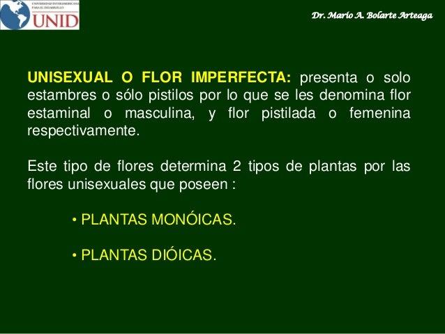 Ejemplos de flores unisexually