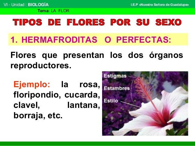 La Flor Botanica
