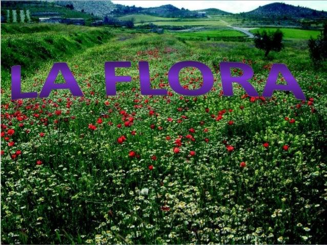 • La flora es un recurso natural renovable, que se regenera por la propagación de las especies mediante la reproducción ve...