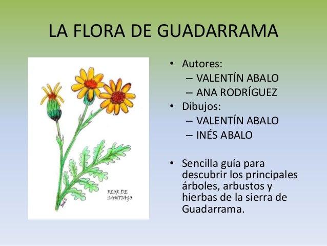 LA FLORA DE GUADARRAMA • Autores: – VALENTÍN ABALO – ANA RODRÍGUEZ • Dibujos: – VALENTÍN ABALO – INÉS ABALO • Sencilla guí...