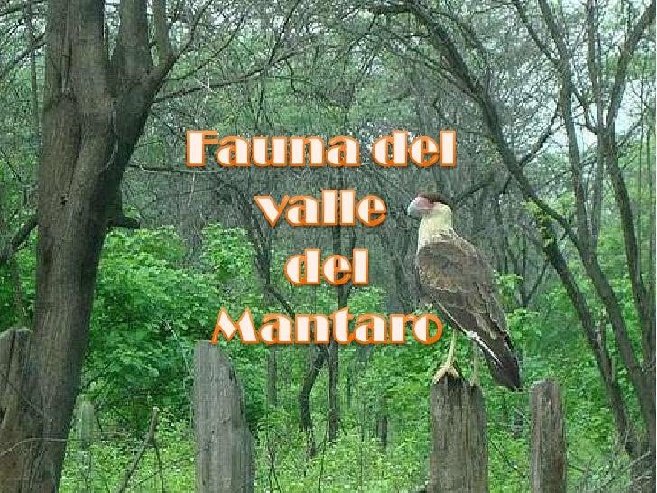 Fauna del valle<br /> del<br />Mantaro<br />