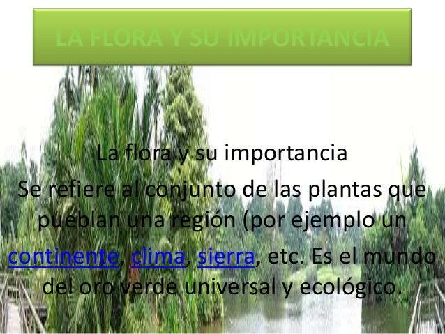 LA FLORA Y SU IMPORTANCIA  La flora y su importancia Se refiere al conjunto de las plantas que pueblan una región (por eje...