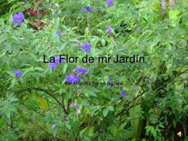 La Flor de mi Jardín Por Migdalia Torres Nazario