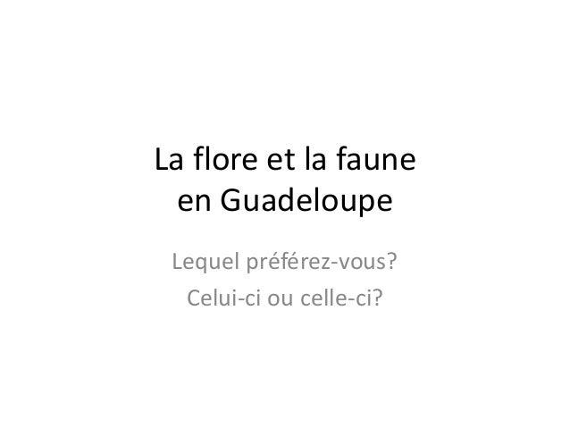 La flore et la faune en Guadeloupe Lequel préférez-vous? Celui-ci ou celle-ci?