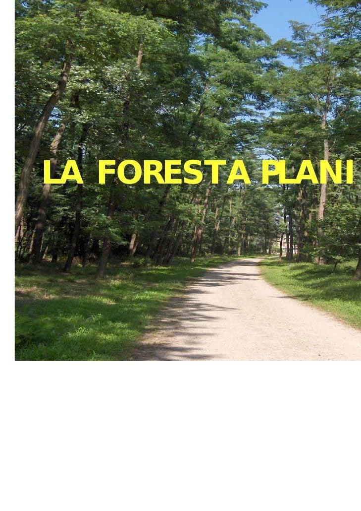 LA FORESTA PLANIZIALE