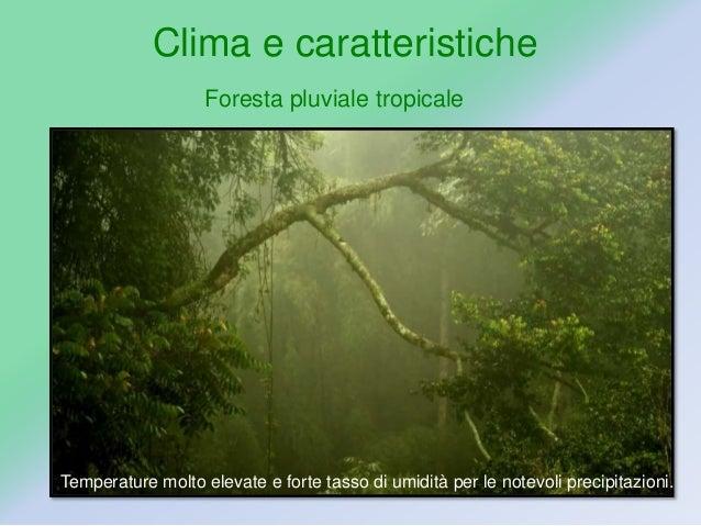 la foresta pluviale francesca gaia e giada