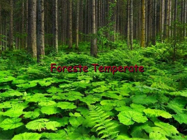 La foresta temperata for Pianta della foresta di pioppo