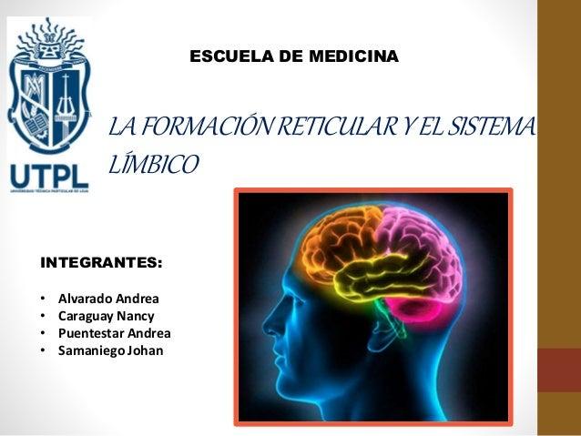 LAFORMACIÓNRETICULARYELSISTEMA LÍMBICO ESCUELA DE MEDICINA INTEGRANTES: • Alvarado Andrea • Caraguay Nancy • Puentestar An...