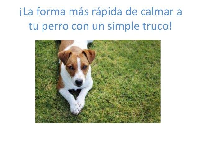 ¡La forma más rápida de calmar a tu perro con un simple truco!