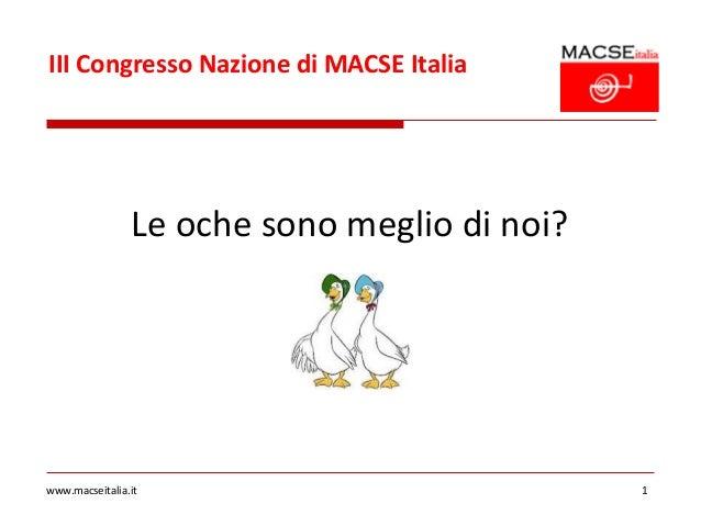 III Congresso Nazione di MACSE Italia                Le oche sono meglio di noi?www.macseitalia.it                        ...
