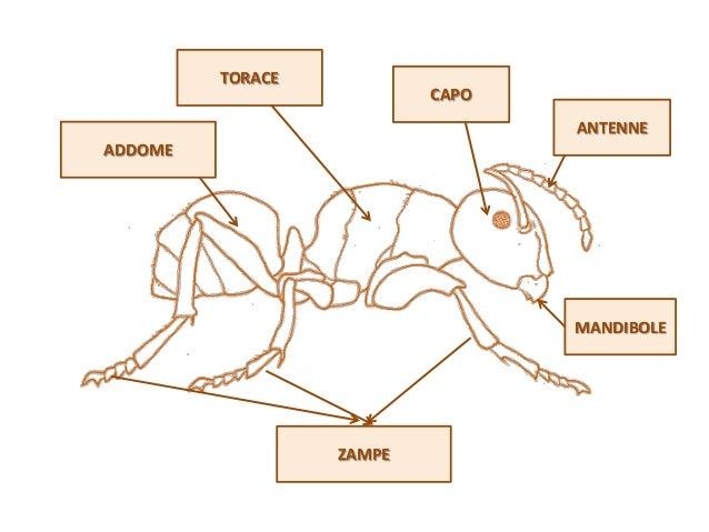 La formica e la cicala Slide 2