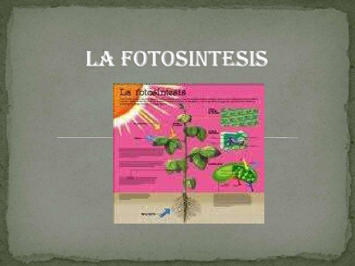 LA FOTOSINTESIS<br />