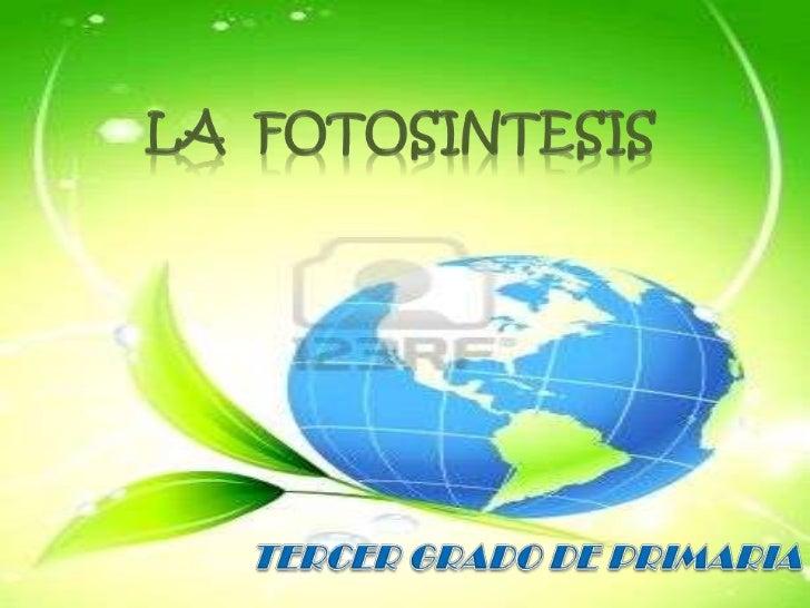 PRESENTACIÓN DE CONTENIDOS1. Las plantas2. Partes de las plantas3. Las plantas producen su propio   alimento (fotosíntesis...
