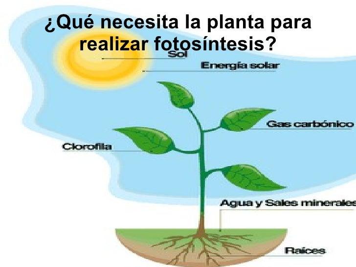 La fotosintesis for Para que se utilizan las plantas ornamentales