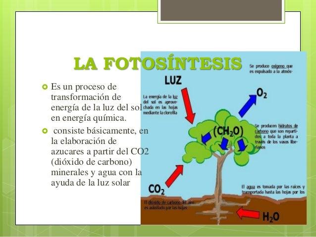 Fotosintesis la luz solar 78