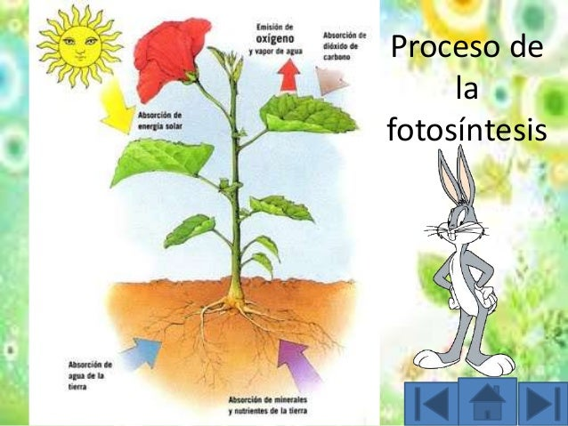 Descripcion del proceso de la fotosintesis 37