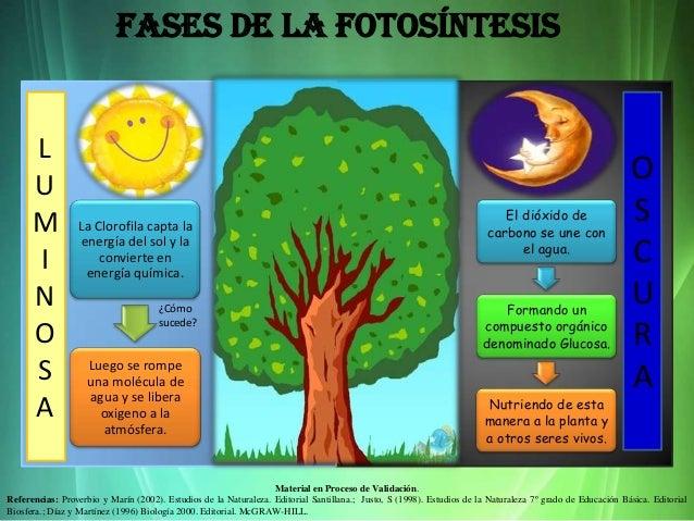 La fotosíntesis. prof dulce vargas