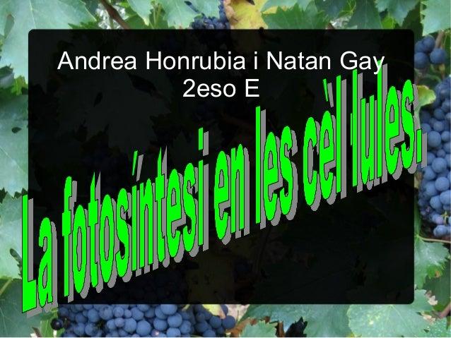 Andrea Honrubia i Natan Gay 2eso E