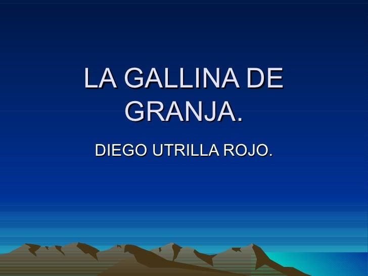 LA GALLINA DE GRANJA. DIEGO UTRILLA ROJO.