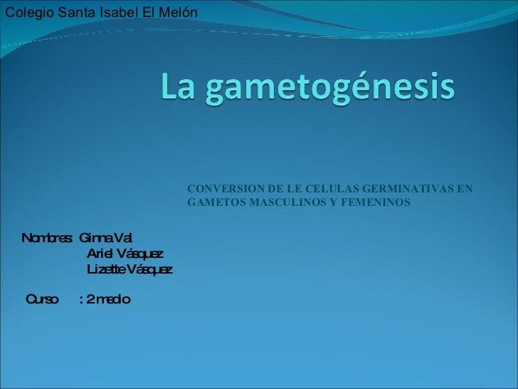 CONVERSION DE LE CELULAS GERMINATIVAS EN GAMETOS MASCULINOS Y FEMENINOS Nombres:  Ginna Val Ariel Vásquez Lizette Vásquez ...