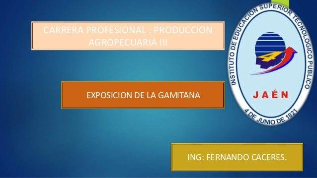 CARRERA PROFESIONAL : PRODUCCION AGROPECUARIA III ING: FERNANDO CACERES. EXPOSICION DE LA GAMITANA