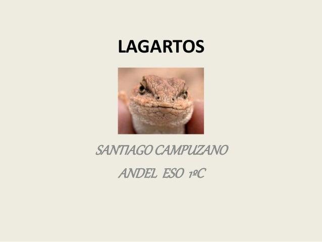 LAGARTOS SANTIAGOCAMPUZANO ANDEL ESO 1ºC