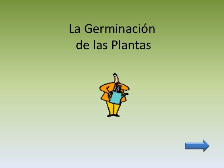 La Germinación de las Plantas