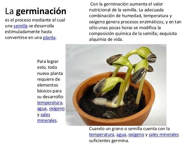 La germinación es el proceso mediante el cual una semilla se desarrolla estimuladamente hasta convertirse en una planta.  ...