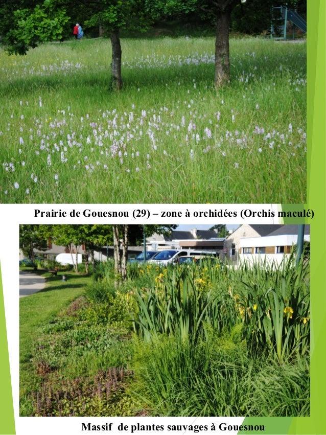 La gestion diff renci e des espaces verts for Espace vert 2000