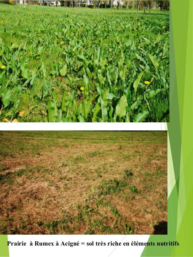 La gestion diff renci e des espaces verts for Espace vert 95