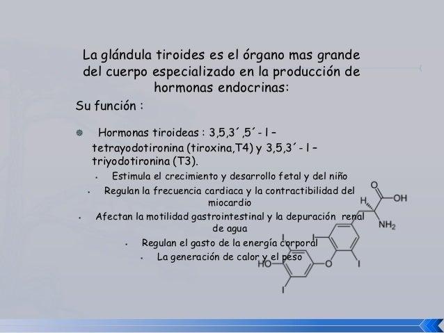 La glándula tiroides Slide 2