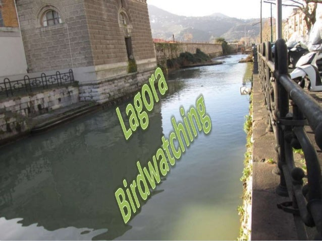 Il Lagora Un angolo di natura in città Un esempio di ecosistema Da più punti di osservazione abbiamo individuato specie vo...